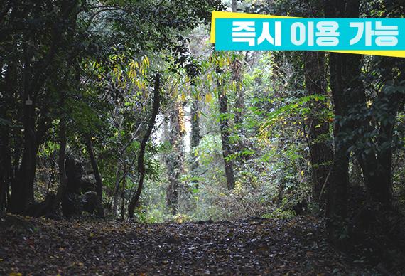 제주 환상숲 곶자왈